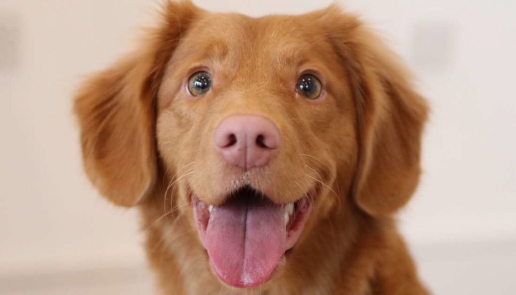 anjing 2